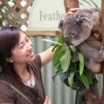 コアラと私