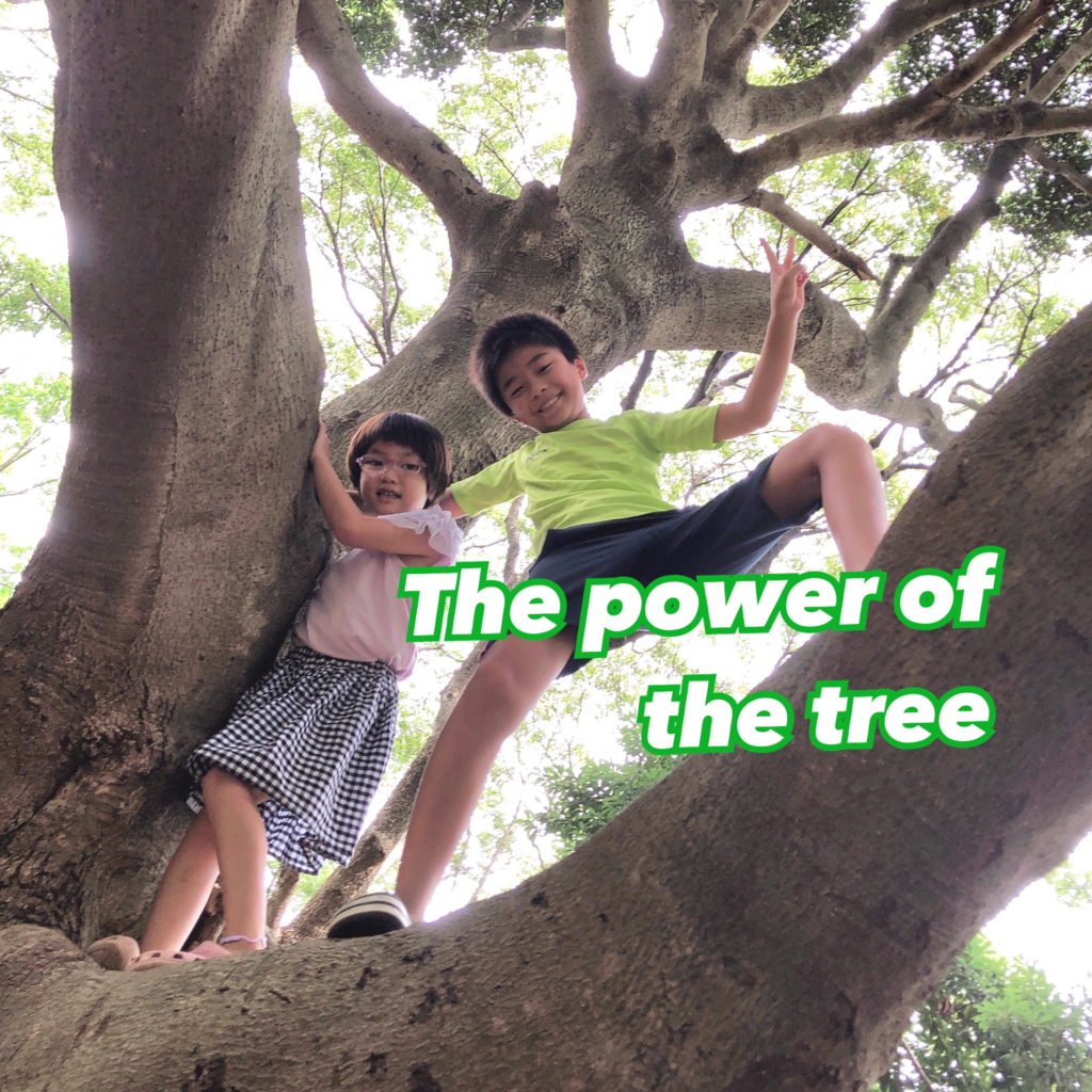 The power of the tree