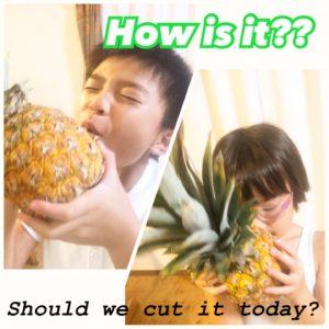 パイナップル 食べ頃はいつ?